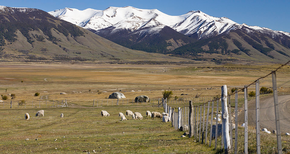 A landscape shot of sheep grazing on pasture land beneath mountains in Argentina.