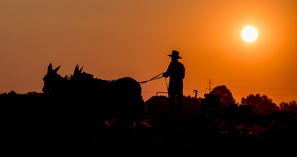 An Amish farmer with a horse-drawn plow at sunset