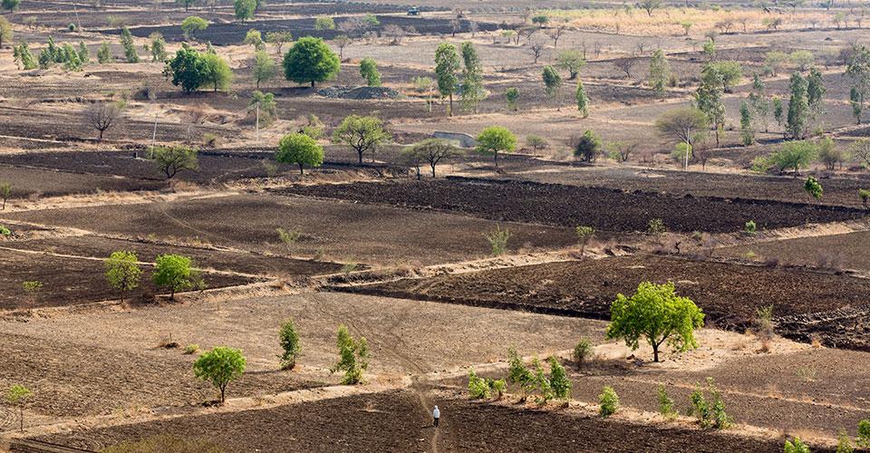 photo of drought-stricken fields by Sean Gallagher